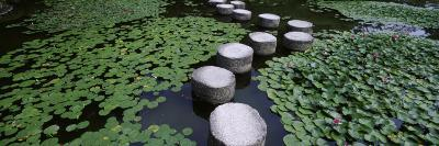 Water Lilies in a Pond, Helan Shrine, Kyoto, Japan