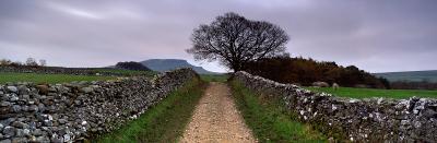 Stone Walls Along a Path, Yorkshire Dales, England, United Kingdom