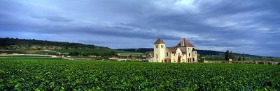 Grand Cru Vineyard, Burgundy, France