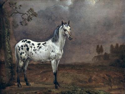 The Piebald Horse, 1653