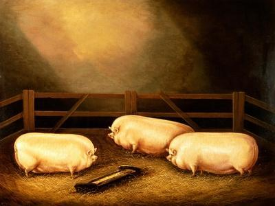 Three Prize Pigs Outside a Sty