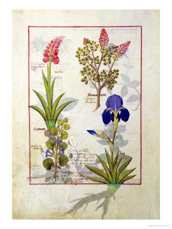 Top Row: Orchid and Fumitory or Bleeding Heart. Bottom Row: Hedera and Iris