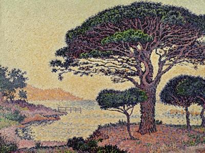 Umbrella Pines at Caroubiers, 1898