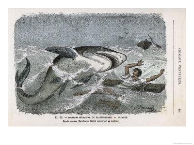 Common Shark (Carcharias Lamia) About to Make a Meal of a Shipwrecked Sailor