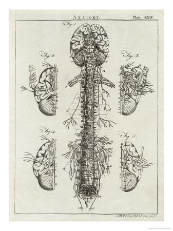 Brain and Spinal Column