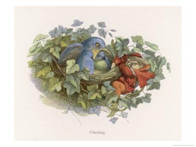 Mischievous Elf Raids a Birds' Nest