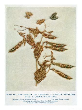 Gregor Johann Mendel Austrian Botanist