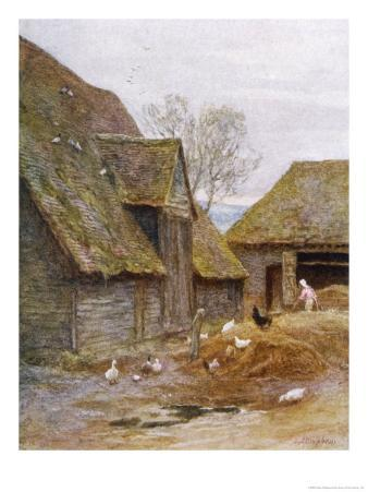 The Farmer's Wife Feeds Her Poultry in a Kent Farmyard