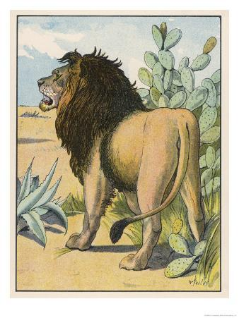 Male Lion Stands Alone in a Desert