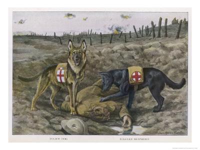 Two Red Cross Rescue Dogs a German Shepherd