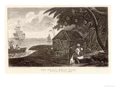 Bread Fruit Taken onto H.M.S. Bounty by Captain Bligh
