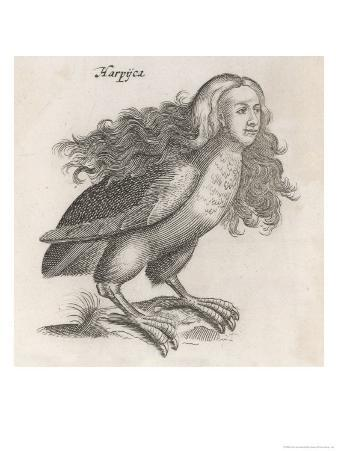 Johnstone Includes the Harpy in His Natural History of Birds