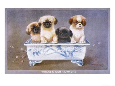 Four Pekingese Puppies Sitting in a Chinese-Style Ceramic Bowl