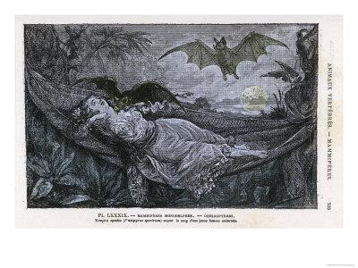 Vampire Bat Bites the Neck of a Sleeping Girl in as Hammock