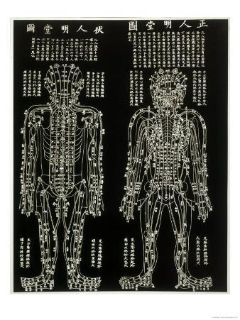 Chinese Acupuncture Chart Showing the Crucial Locations on the Body