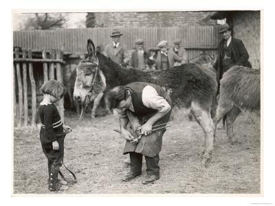 Shoeing (Hooving) a Donkey at a Farm in Deal