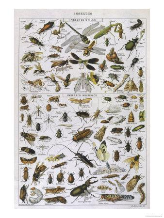 Insects Divided into Their Two Kinds Useful and Harmful