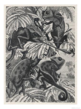 Chameleons in Foliage