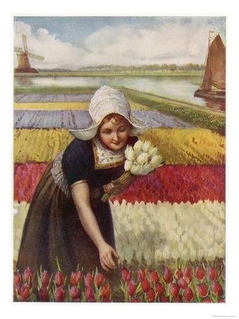 Dutch Girl and Tulips