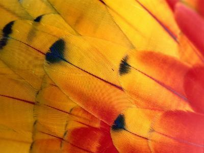 Detail of Macaw Feathers from the Tambopata Candamo National Park, Amazonas, Peru