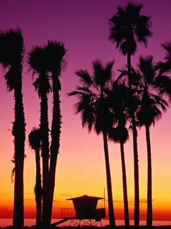 Palm Trees at Sunset, Venice Beach, Los Angeles, Los Angeles, California, USA