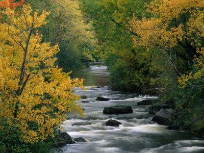 Autumn Colours on the Banks of the Rue River, Quebec, Canada