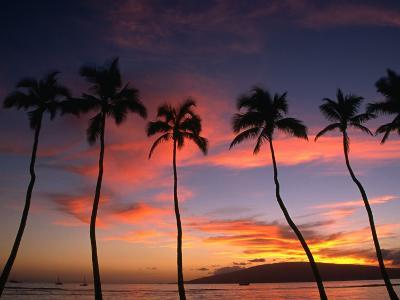 Coconut Palms and the Island of Lanai at Sunset from the Seawall on Front Street, Lahaina, Maui