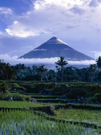 Mt. Mayon, One of the Most Dangerous Volcanoes in the World, Above Rice Paddys, Albay, Philippines