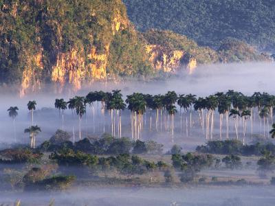 Morning Mist Over Vinales Valley, Pinar Del Rio, Cuba