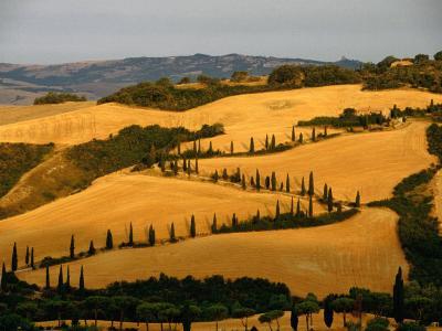 Golfen Tuscan Landscape Near La Foce, Tuscany, Italy