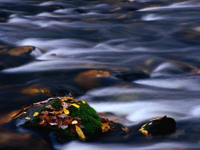 Stream and Mossy Rock Great Smoky Mountains National Park, Tennessee, USA