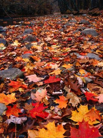 Fall Leaves Create a Patchwork of Colours, Great Smoky Mountains National Park, Tennessee, USA