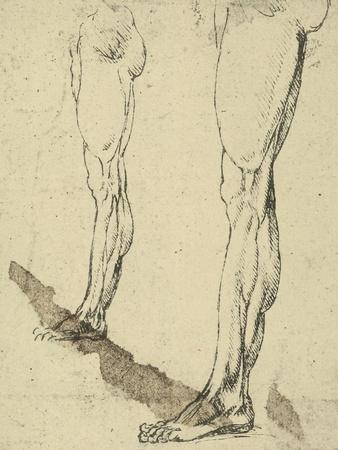 Study of Legs, Drawing, Royal Library, Windsor
