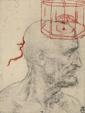 Study of a Male Profile, Black and Sanguine Pencil Drawing on Gray Paper, Royal Library, Windsor