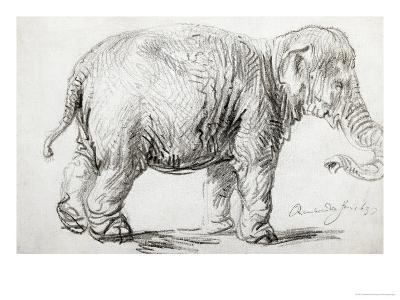 Elephant, 1637, Black Chalk Drawing