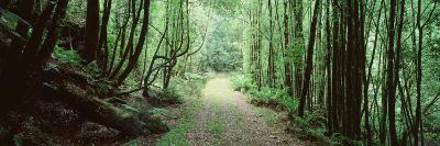 Trees along a Trail, Rain Forest Trail, Wild Rivers National Park, Australia