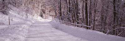 Bare Trees along a Snow Covered Road, Crystal Downs, Michigan, USA