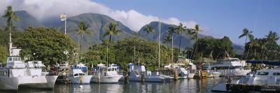 Boats Moored at a Harbor, Lahaina, Maui, Hawaii, USA
