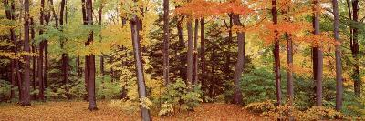 Autumn Trees in a Forest, Chestnut Ridge Park, New York, USA