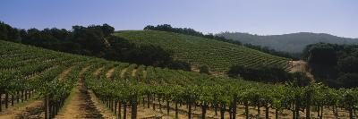 Vineyard on a Landscape, Napa Valley, California, USA