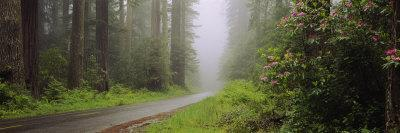 Empty Road Passing through a Forest, Redwood National Park, California, USA