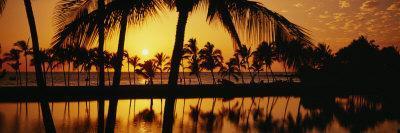 Silhouette of Palm Trees at Sunset, Anaeho Omalu Bay, Waikoloa, Hawaii, USA