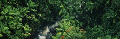 Waterfall in a Rainforest, Hamakua Coast, Hawaii, USA