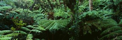 Trees in a Forest, Hawaii Volcanoes National Park, Hawaii, USA