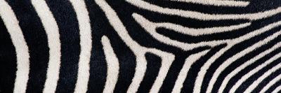 Greveys Zebra Stripes