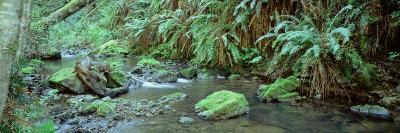 Stream Flowing through a Rainforest, Van Damme State Park, Mendocino, California, USA