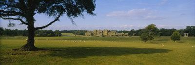 Flock of Sheep Grazing in a Field, Holkham Hall, Norfolk, England