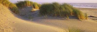 Grass on the Beach, Pacific Ocean, Boardman State Park, Oregon, USA