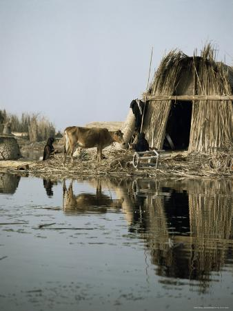 Village in the Marshes, Iraq, Middle East