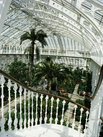 Interior of the Temperate House, Restored in 1982, Kew Gardens, Greater London
